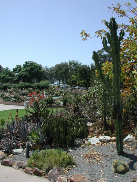 Cacti and roses, Baloboa Park